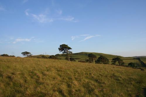 Pines of Cragmire Plantation