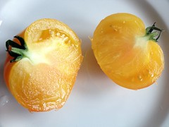 Yellow Heirloom Tomato