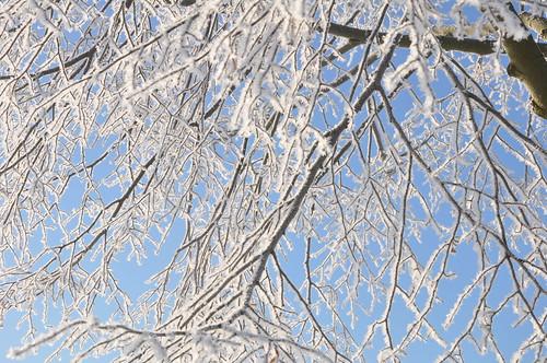 Winterwald #holzvonhier