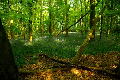 20130519-15_Cawston Bluebell Woods by gary.hadden