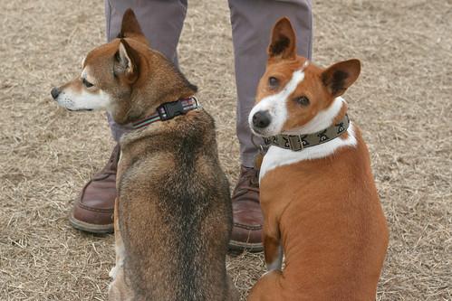 Tula and Bowpi