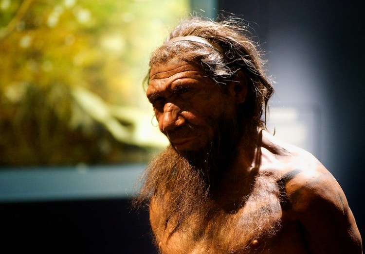 13809176994_eb78a2aa2f_c The Distinctive Facial Differences Between Archaic Neanderthals and Modern Humans Random