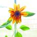 Exposed Sunflower