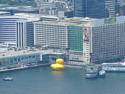 Rubber Duck as viewed from The Peak, Hong Kong Island