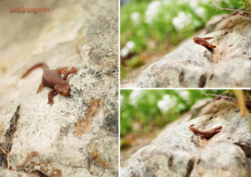 Salamander001_BLOG