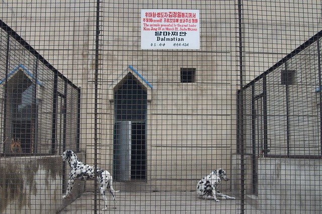 Pyongyang Zoo Dog Pen