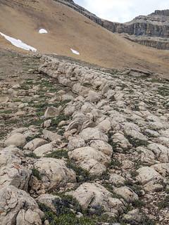 Huge stromatolite reef below Cirque Peak