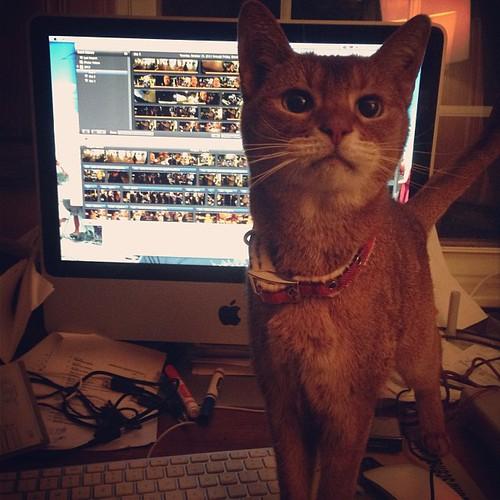 Helper cat is helping.