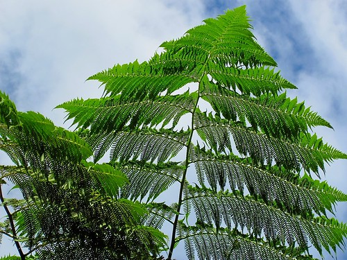 Ferns reaching to the sky