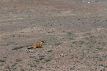 Wij reden snel verder. Naast vogels waren dit de enige wilde dieren die we zagen.