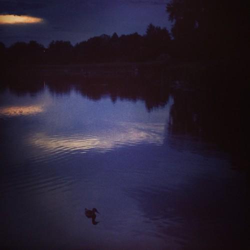Lone duck at Croke Reservoir #denver by @MySoDotCom
