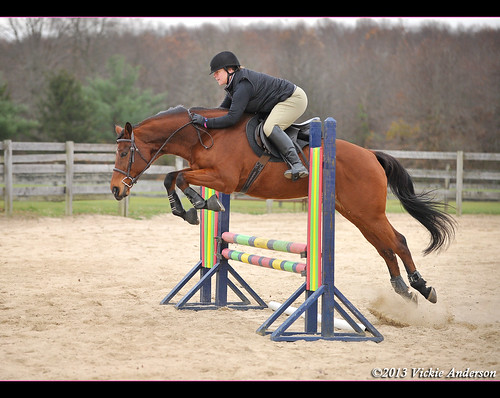Wizard's weekly jump school. Did a little gymnastic line of a placing pole to a cross rail, then two strides to a vertical.