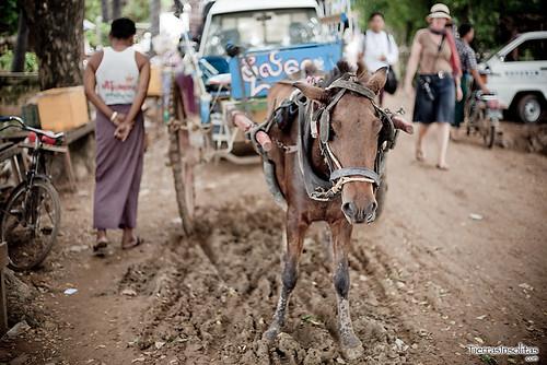 Carro caballos en Inwa (Myanmar)