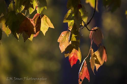 Ault Autumn 010as