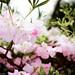 UPhoto-Photowalk-Spring11
