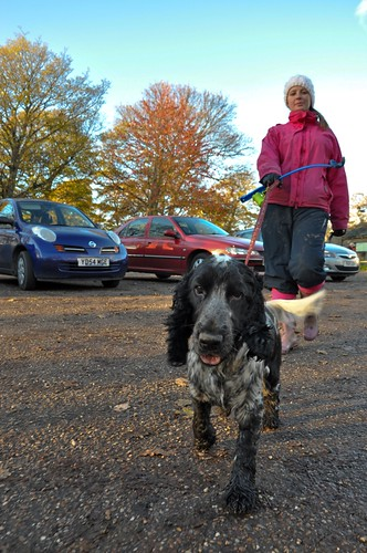 Charlie Nov13 (18 of 19) by doggonwheels