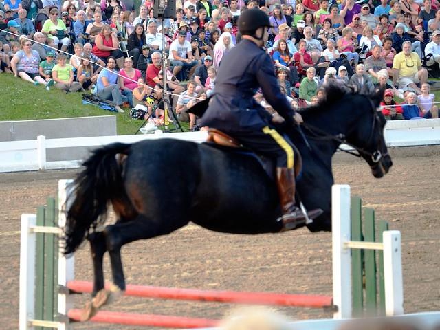 Horse Jump 3
