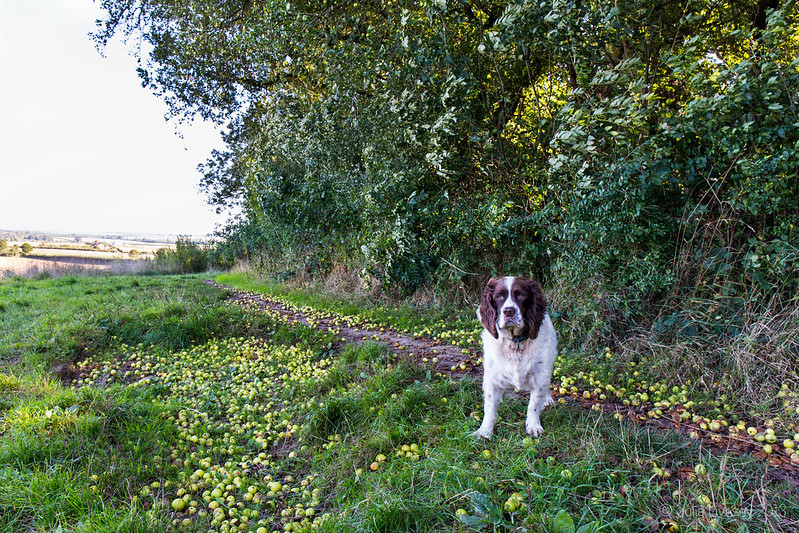 Max in the windfall crab apples