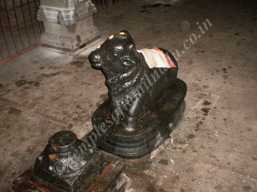 Nandi in the Sivan Sannadhi, Thiruvisanallur, Sivayoginathar Temple