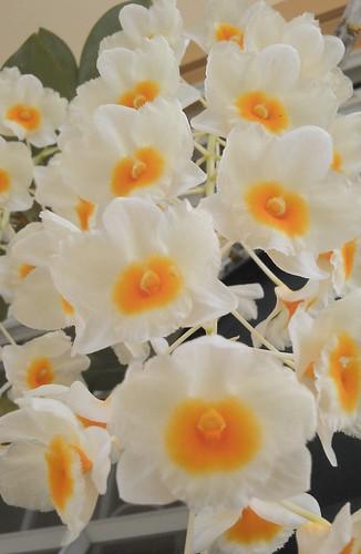 orquidias caidas