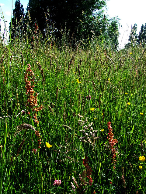 cemetery meadow 3