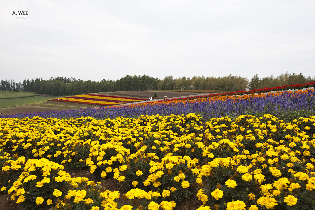 Shikisai-no-oka Flower Field