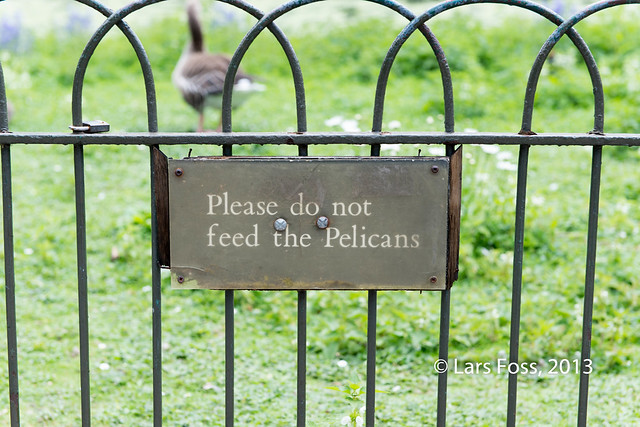 Don't feed the Pelicans!