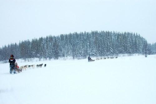 Tromso dog sledding