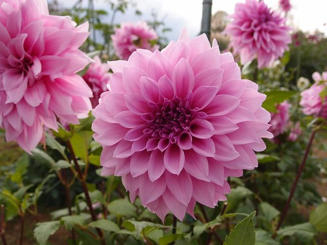 Flower @ Showa Kinen Park @ Tachikawa