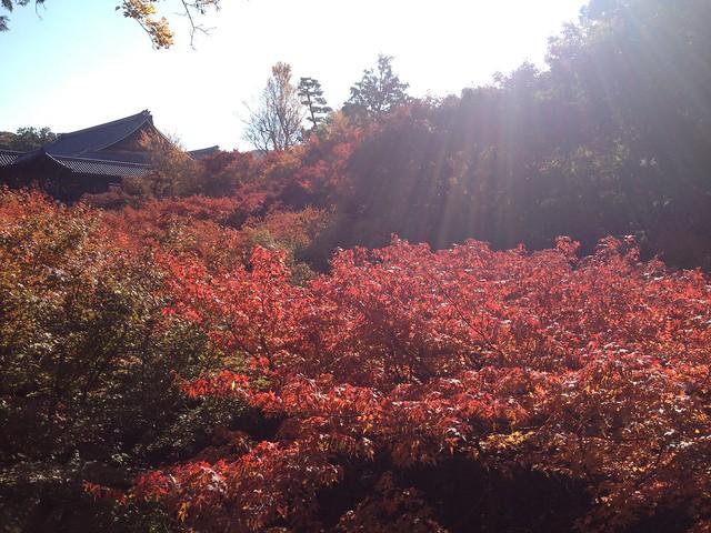 Tofukuji (東福寺)