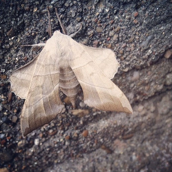 Carnival of Homeschooling: Wordless Wednesday Edition - Leafy Little Moth