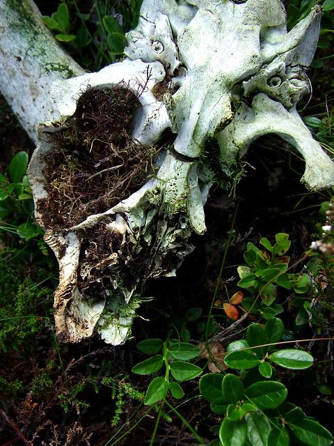 bones on the moor