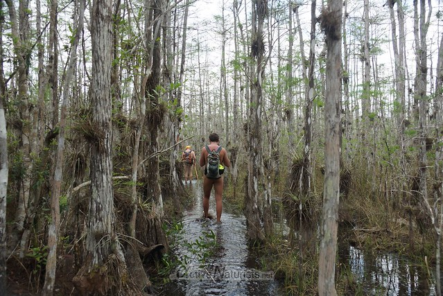 naturist 0004 Big Cypress Preserve, Florida, USA