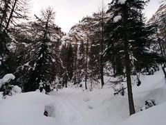 Skitour Großer Jaufen Aufstieg durch den Wald