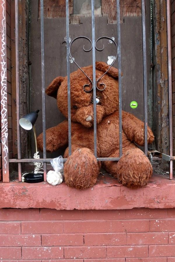 Teddy 12092013