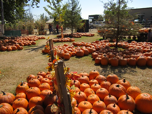 Pumpkin Patch 2013 004