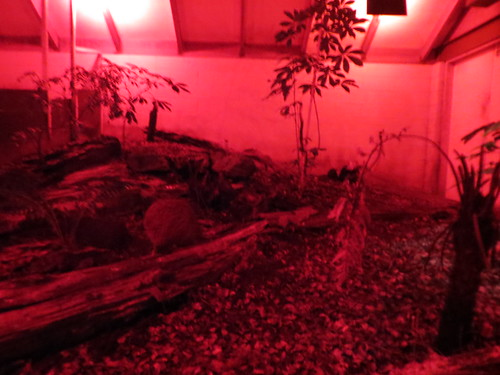 kiwi enclosure