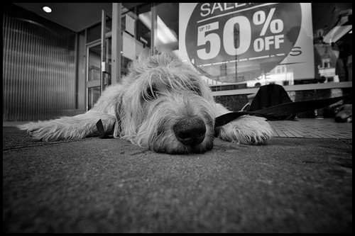 Dog Tired by Davidap2009