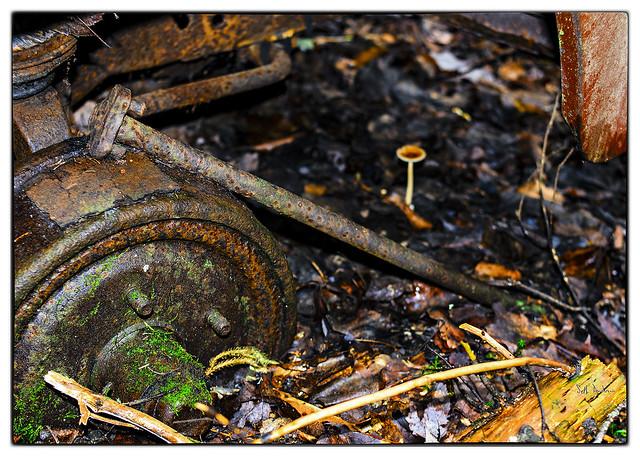 Fungii Brakes