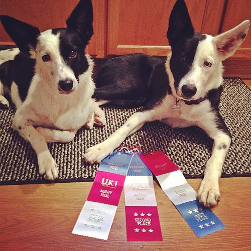 "#spendallthemoney but I'm really excited for Brilliant Dogs first show this weekend. Here are Kate and Peat looking tortured modeling our ribbons. Haha at Kate she's all ""don't touch me"""
