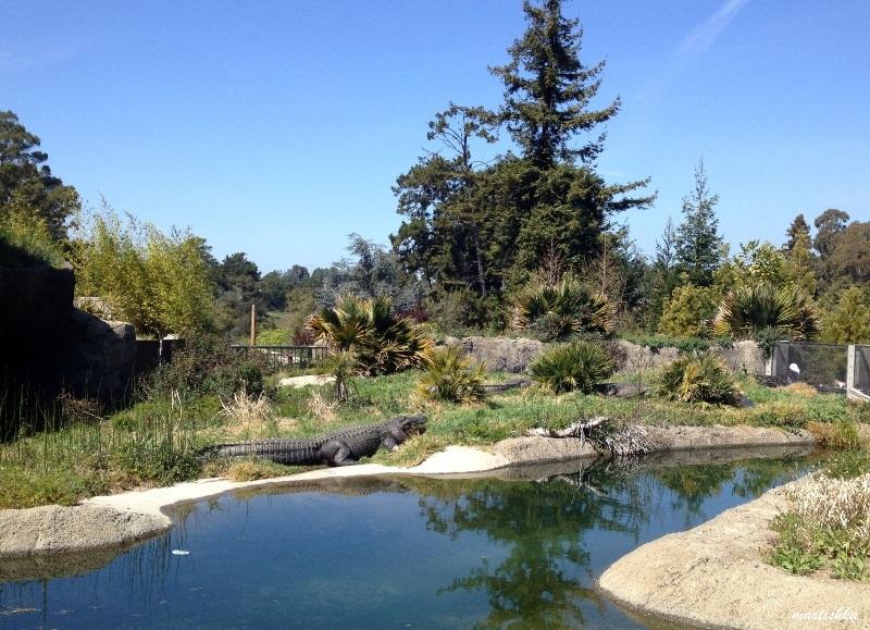 Oakland Zoo (26)