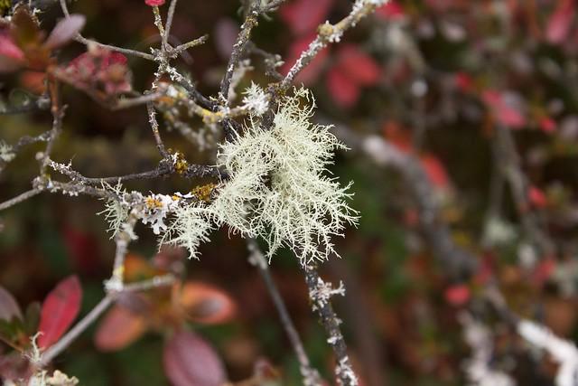 Thin White Lichens
