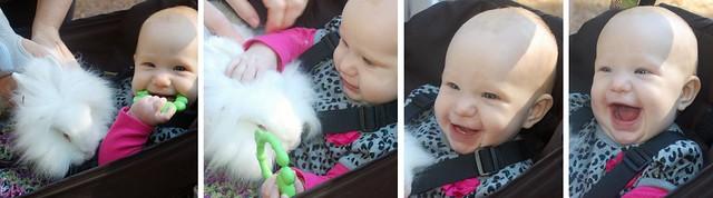 elizabeth bunny (1280x356)