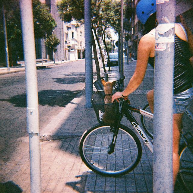 perro y bici