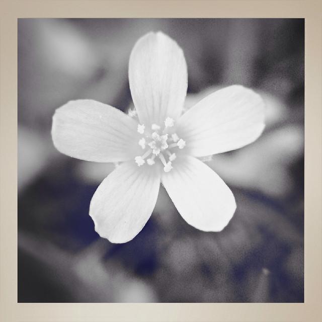 Flower LightBoxr Demo - 2
