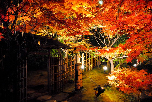 Shirotori Fall Lightup 019r