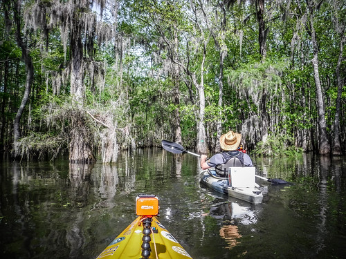 Sparkleberry Swamp-30