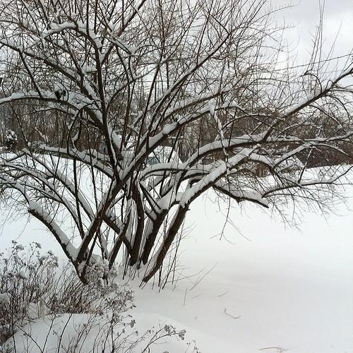 More. Snow