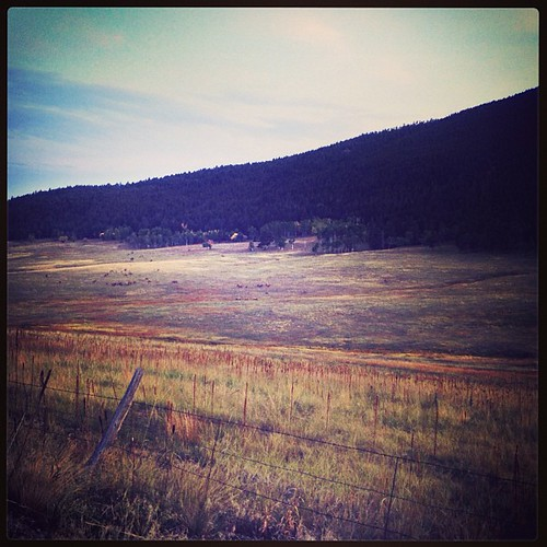 Elk Meadow by @MySoDotCom