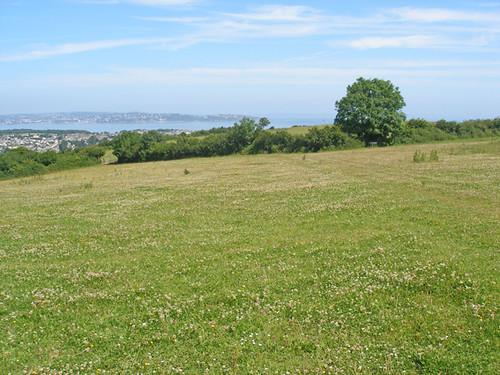 Field above Brixham